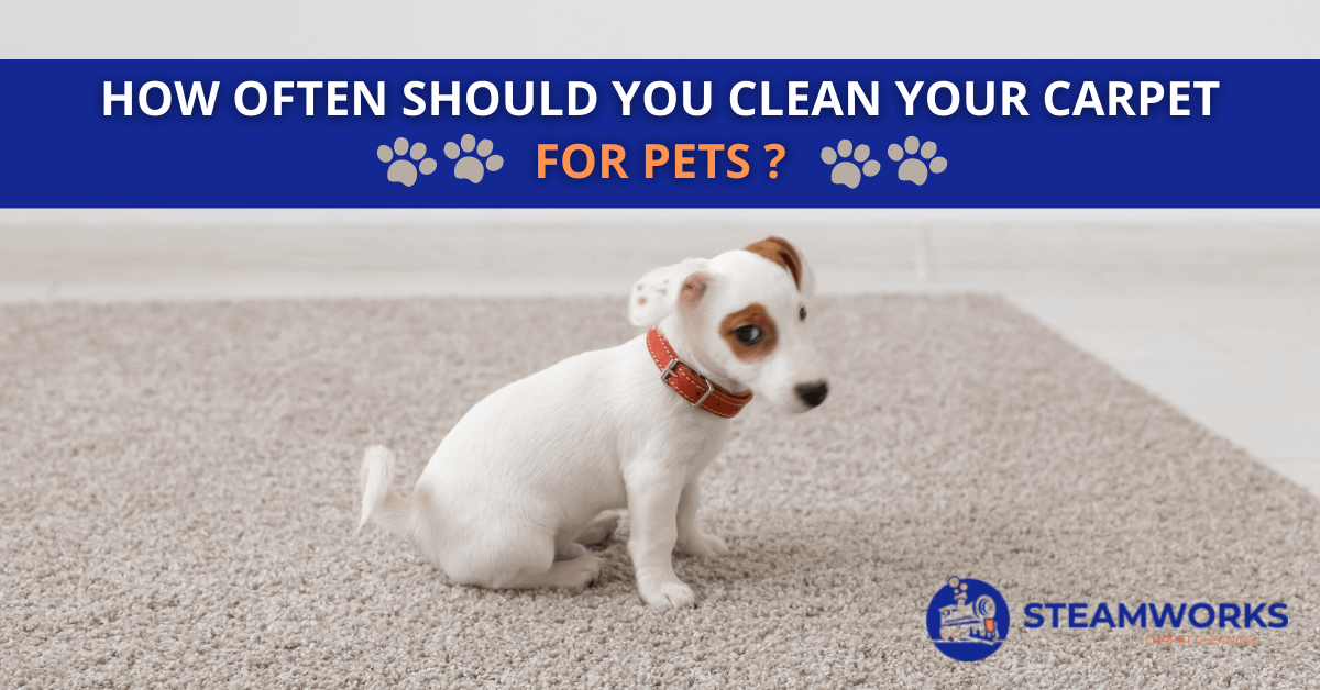 How Often Should You Clean Your Carpet For Pets